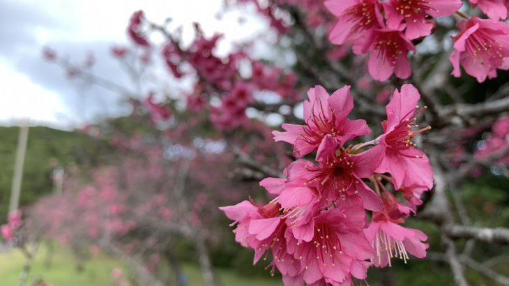 久米島のおすすめ花見スポット